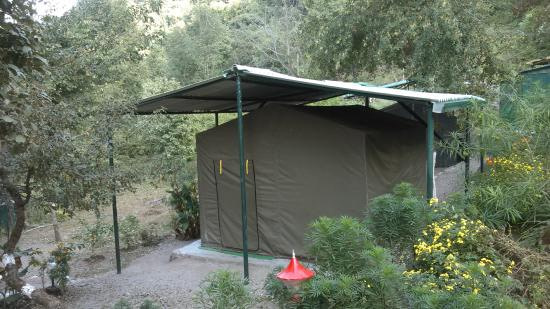 jungle-camping-in-rishikesh